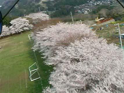 空撮・桜満開 カメ�..